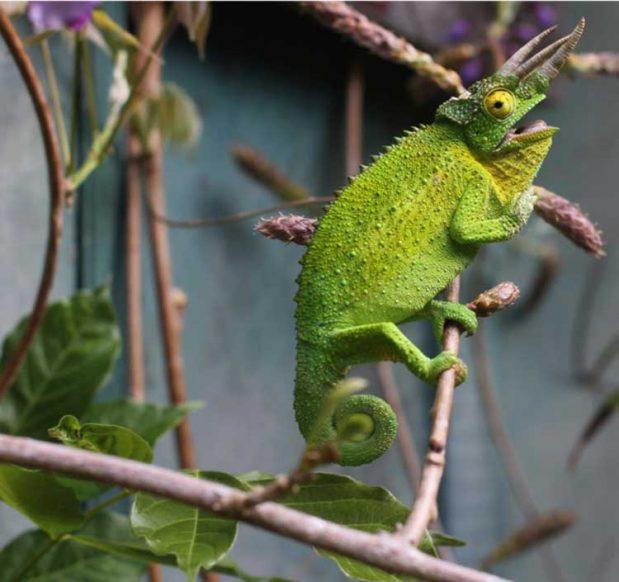 no-FEAR-Negotiations-Part-V-no-Attachment-chameleon-pic